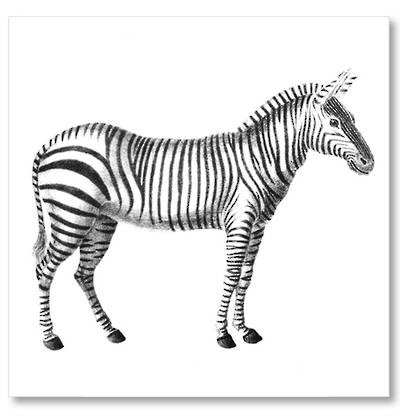 Vintage Inspired Zebra Art Block